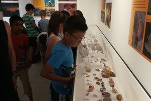 Schneckenausstellung im Biologiezentrum