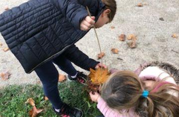 Herbstspaziergang-Blätterbäume basteln