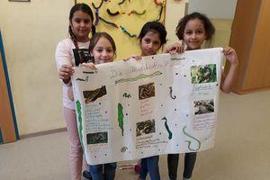 Schlangen-Plakate gestalten