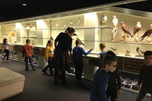 """Schlossmuseum Linz Workshop """"Natur in OÖ"""""""